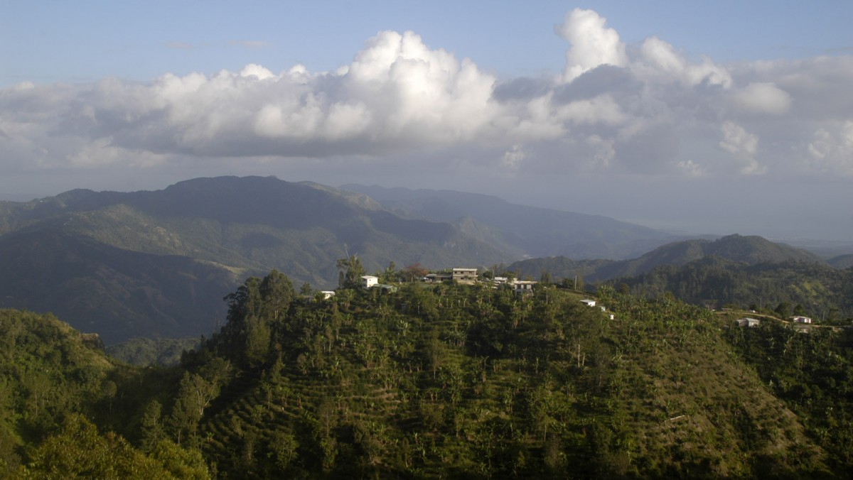 An environmentally friendly coffee estate set in 10 acres, 3452 ft above sea level at the heart of Jamaica's Blue Mountains, the highest mountain range in the the Caribbean rising up to 7,000 ft.